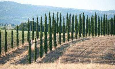 Toscana Scansano Investimenti Immobiliari in Borgo Medievale